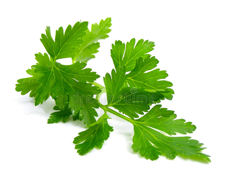 Fresh branch of green parsley. Natural food isolated over white background