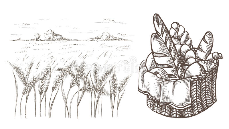 Fresh Bread Basket and Ears of wheat royalty free illustration