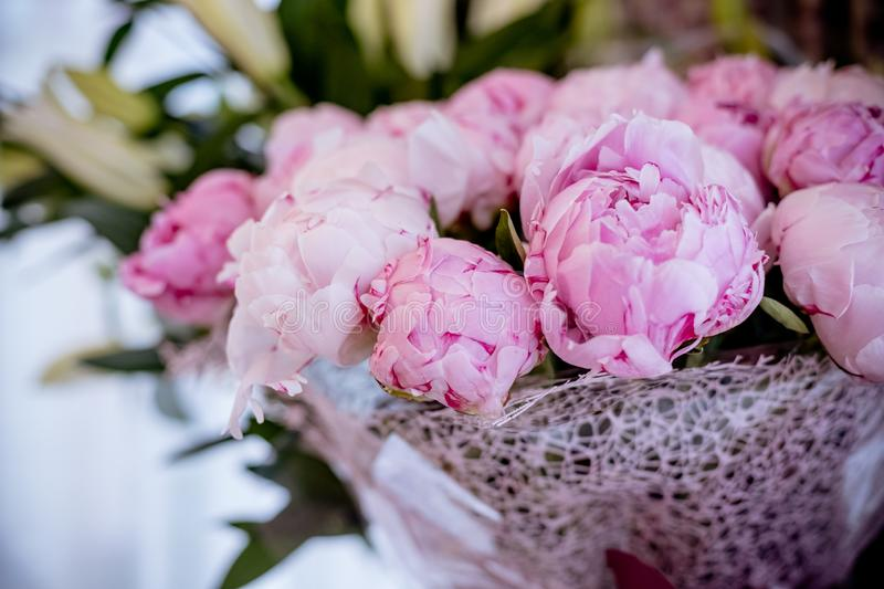 Fresh bright blooming peonies flowers with dew drops on petals. pink bud.Copy space.Happy mothers day, floral greeting. Fresh bright blooming peonies flowers royalty free stock images