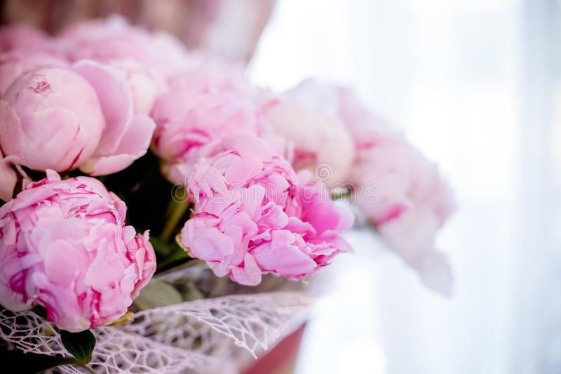 Fresh bright blooming peonies flowers with dew drops on petals. pink bud.Copy space.Romantic present.Happy mothers day. Fresh bright blooming peonies flowers stock photography