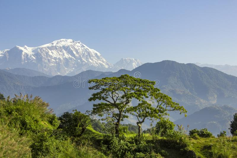 Fresh bright green grass and a tree against the backdrop of a mountain valley with wooded slopes and the snowy peak of Annapurna stock photos