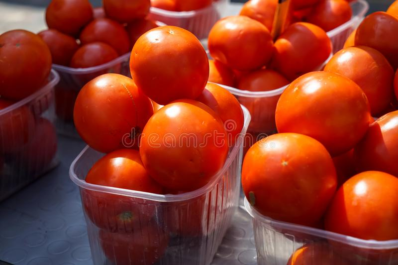 Fresh bright juicy red tomatoes selling in boxes with sunlight reflection on sunshine day in local city market royalty free stock photography