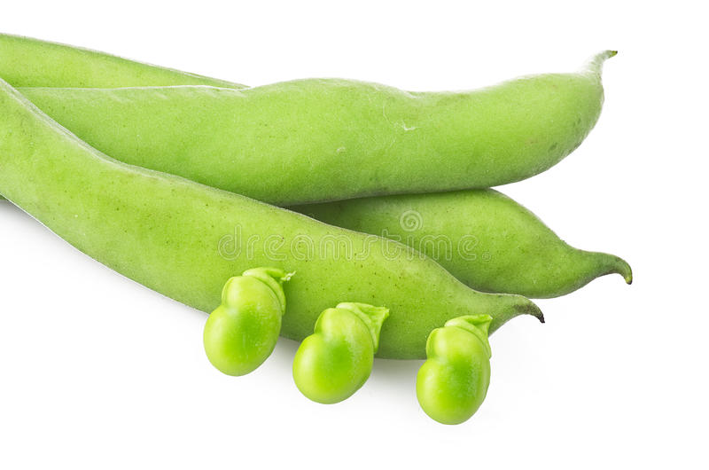Download Fresh broad beans stock photo. Image of homegrown, fave - 31367294