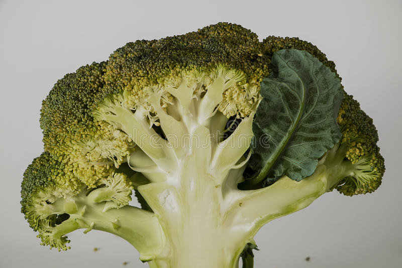 Fresh broccoli with leaves. Shaped tree stock photos