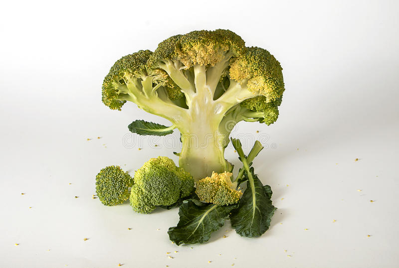 Fresh broccoli with leaves. Shaped tree royalty free stock images