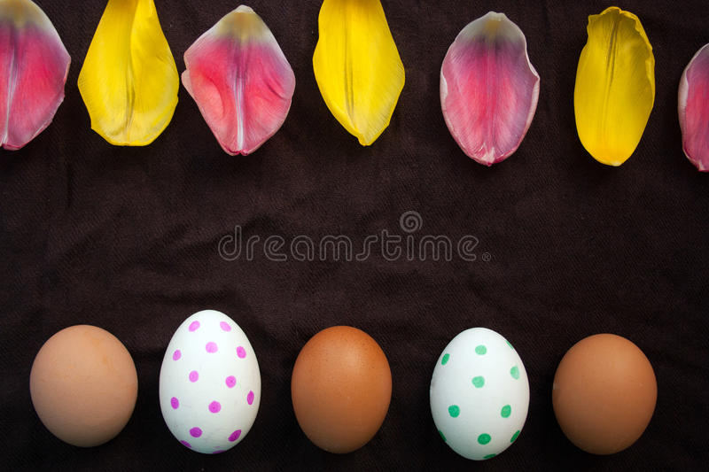 Fresh brown eggs and painted Ester eggs and petals of a Tulip royalty free stock image