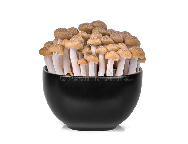 Fresh brown shimeji mushroom, beech mushrooms or edible mushroom in the black bowl isolated on white stock photo