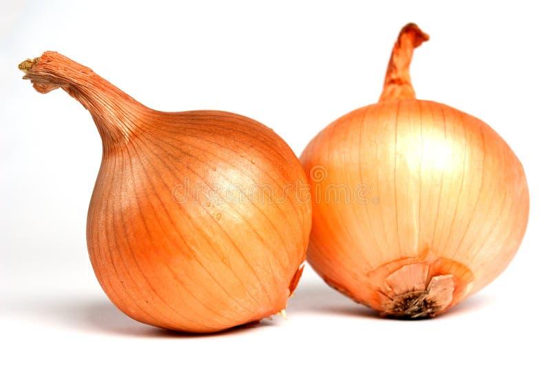 Fresh bulbs of onion royalty free stock photos