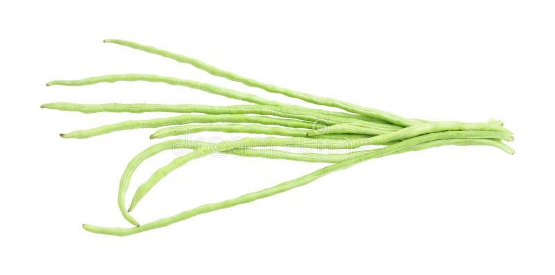 Fresh bunch green yard long bean royalty free stock image
