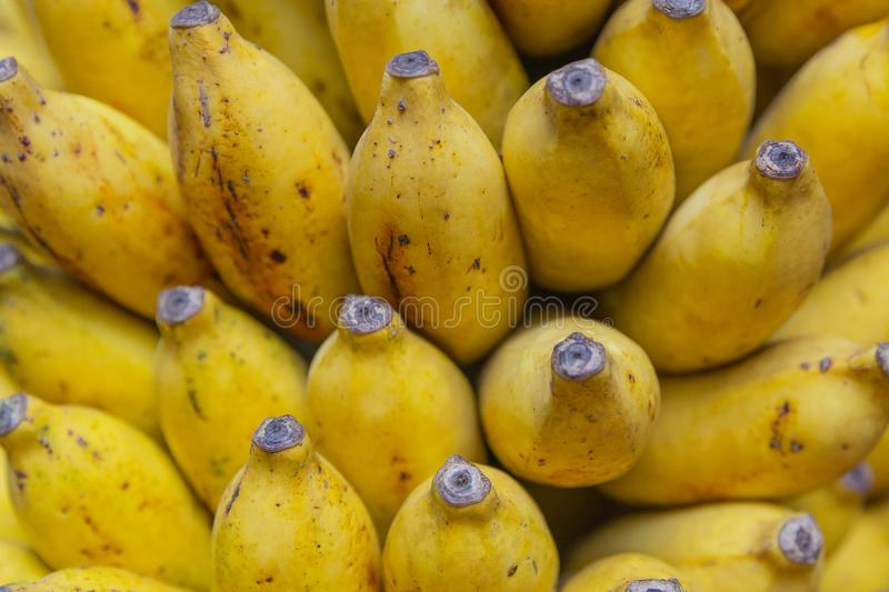 A Fresh Bunch stock images