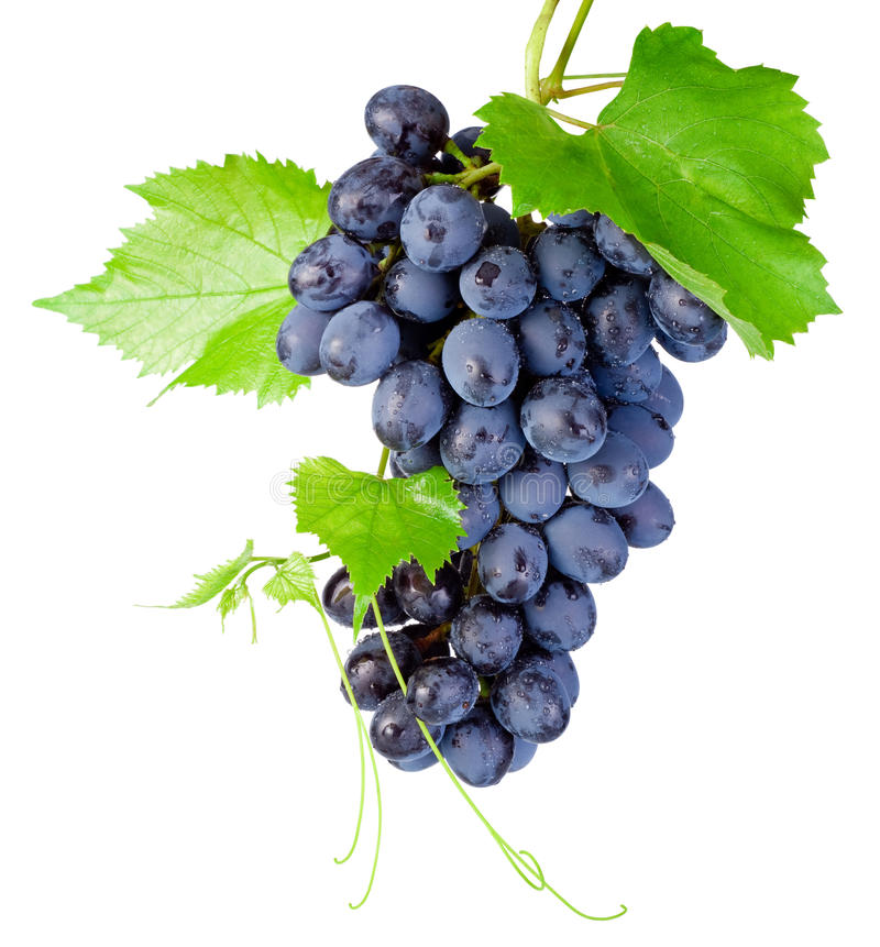 Free Fresh Bunch Of Grapes With Leaves Isolated On White Background Stock Photography - 50780972