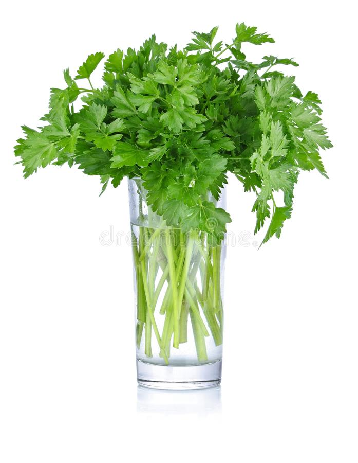 Fresh Bunch Parsley In Glass Royalty Free Stock Photos