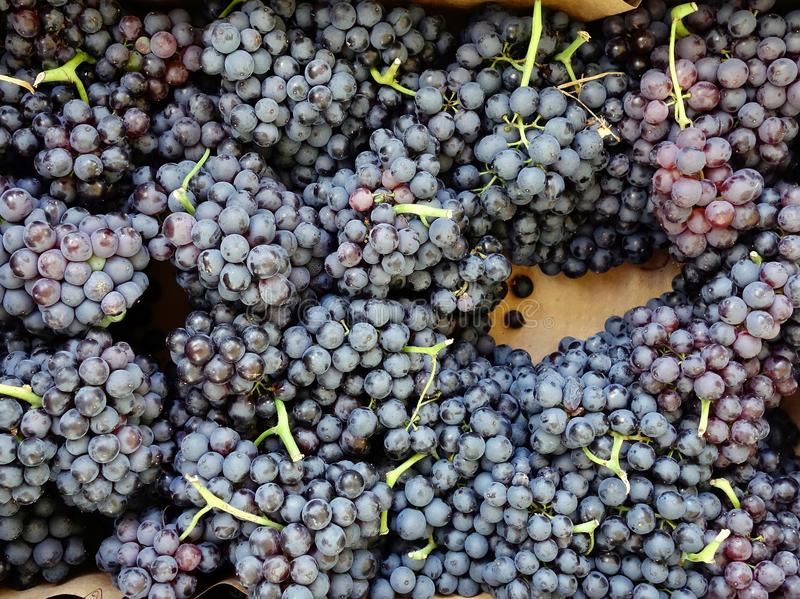 how to make wine from grape juice and yeast