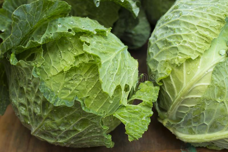 Fresh cabbage on the market - Brassica oleracea var. capitata. The medicinal properties of cabbage serve to prevent and cure digestive tract ulcers royalty free stock photography