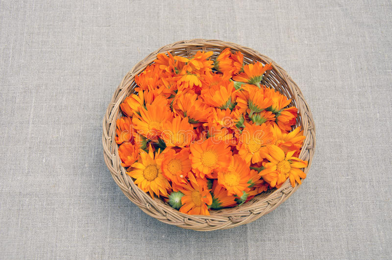 Calendula medical flowers in wicked basket stock image