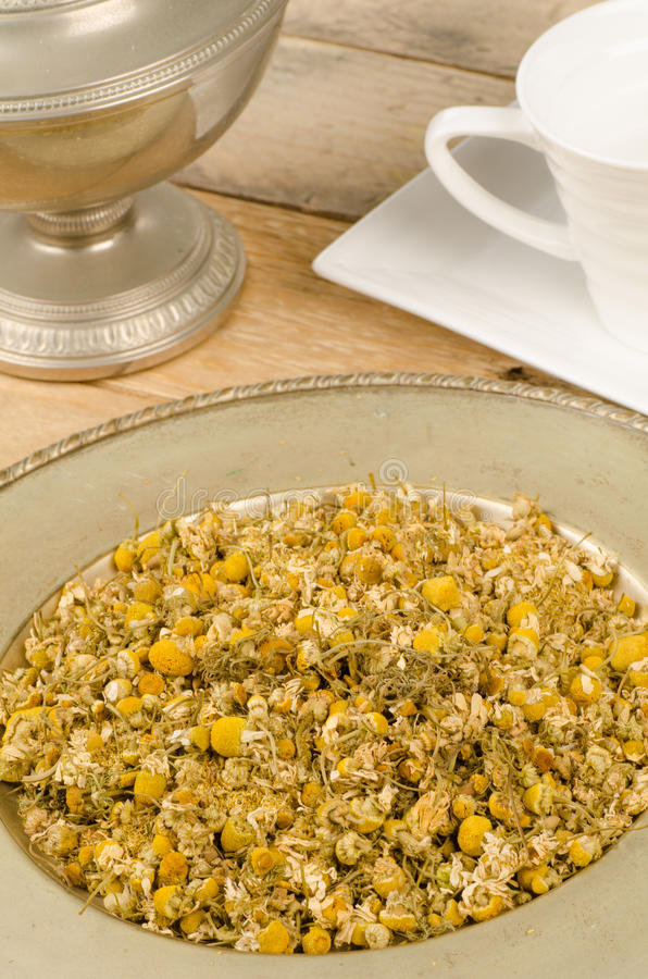 Fresh camomile for tea stock photos