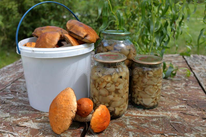 Fresh and canned mushrooms stock photos