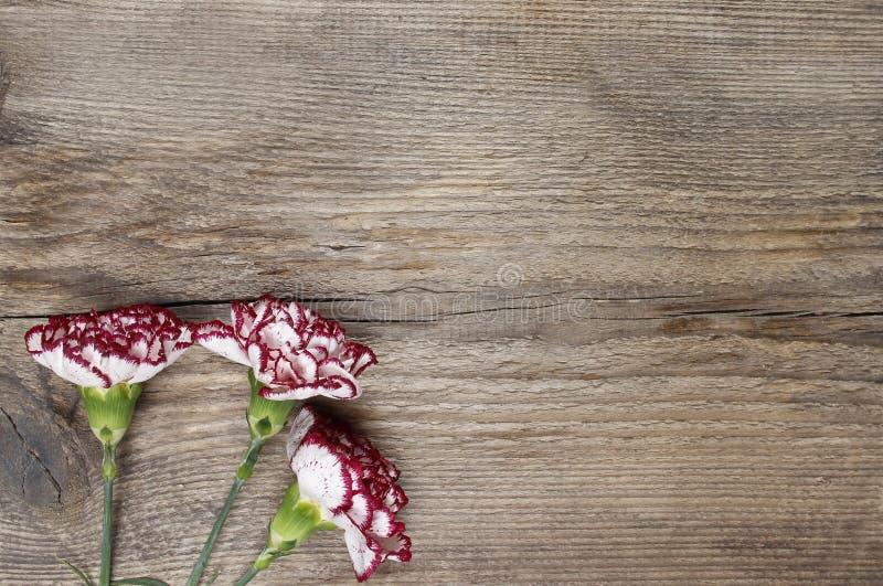 Fresh carnation flowers on wooden background stock image