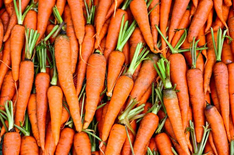 Download Fresh Carrots stock image. Image of sauce, nuwara, juicy - 33341849