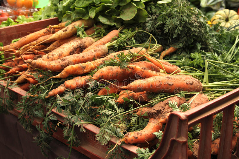 Fresh carrots in a crate. Against a background of other vegetables stock image