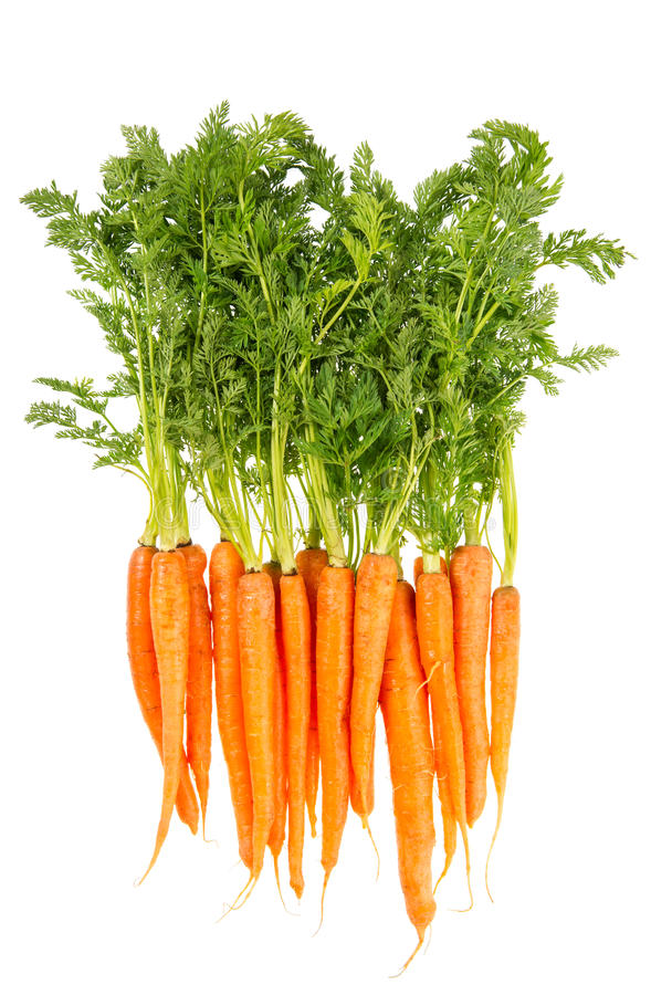 Download Fresh Carrots With Green Leaves Isolated On White Stock Photo - Image: 30485508