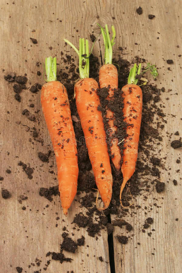 Fresh carrots and soil on wood royalty free stock photo