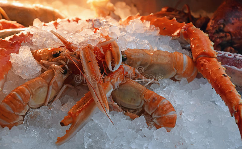 Fresh catch of langoustine lobsters on ice royalty free stock photo