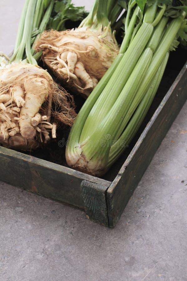 Fresh celeriac celery. Fresh harvested celeriac and celery in wooden tray royalty free stock images