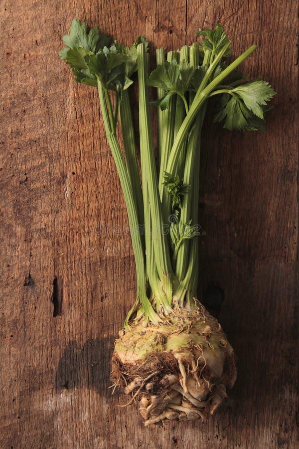 Fresh celeriac celery. Fresh harvested celeriac and celery in wooden tray stock image