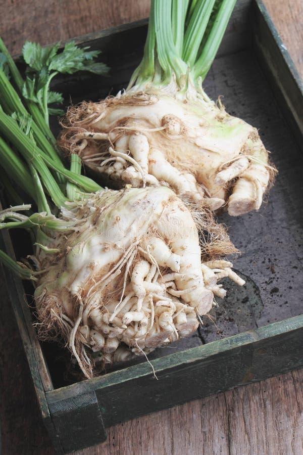 Fresh celeriac. Feesh celeriac in wooden tray royalty free stock image