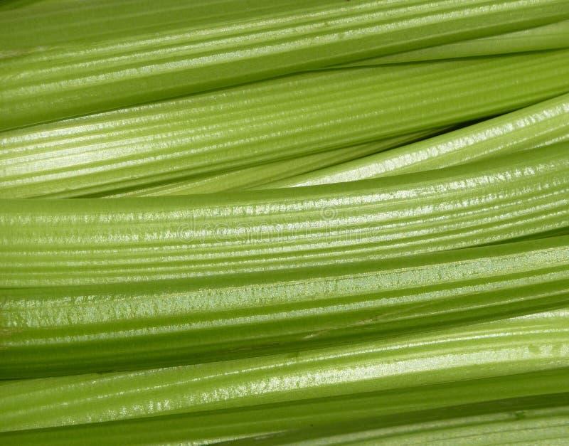 Fresh celery royalty free stock images