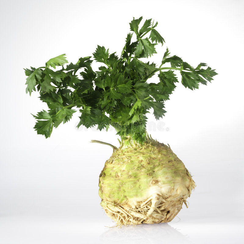 Fresh celery with root stock photography