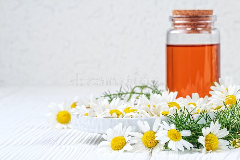 Fresh chamomile flowers royalty free stock images