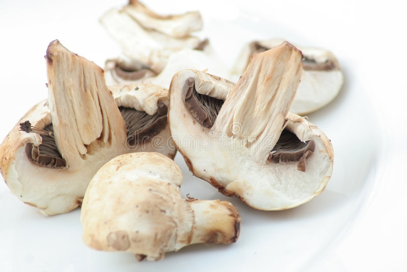 Download Fresh champignon mushroom stock photo. Image of champignon - 7212582