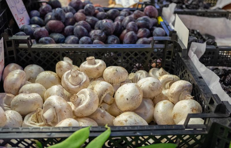 Fresh champignon mushroom for sale at the city market of Wroclaw stock images