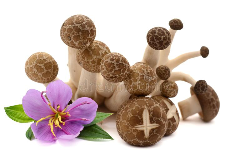 Mushrooms. Fresh champignon mushrooms with parsley isolated on white background. Ingredient, vegetables stock photo
