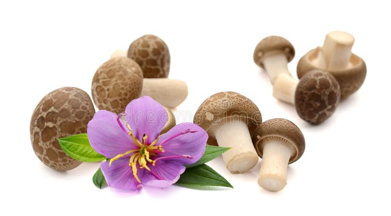 Mushrooms. Fresh champignon mushrooms with parsley isolated on white background. Ingredient, vegetables stock images