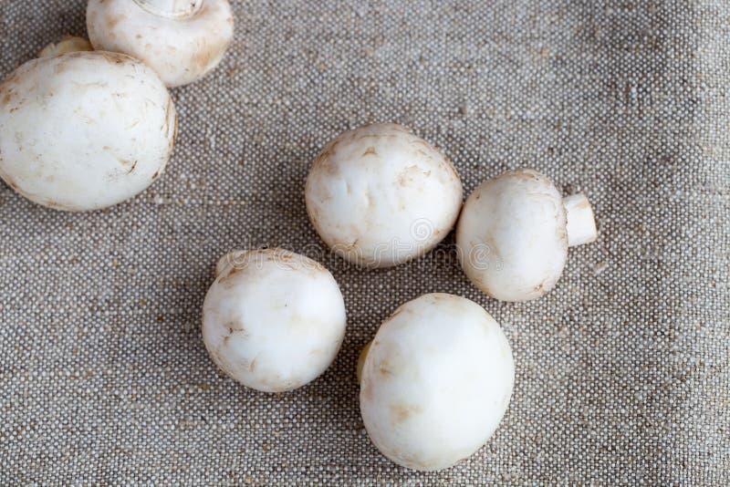 Fresh champignons. On the burlap stock photography