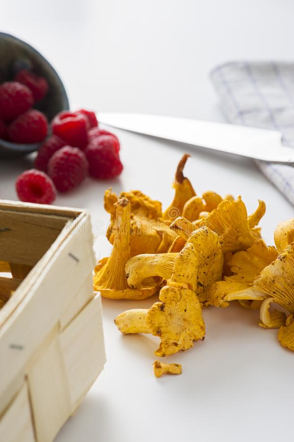 Fresh chanterelle mushrooms from an autumn forest stock image