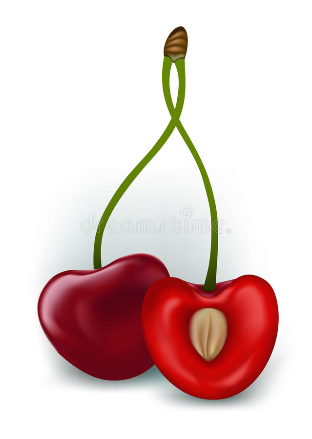 Download Fresh cherries stock vector. Image of blue, colorful - 25372139