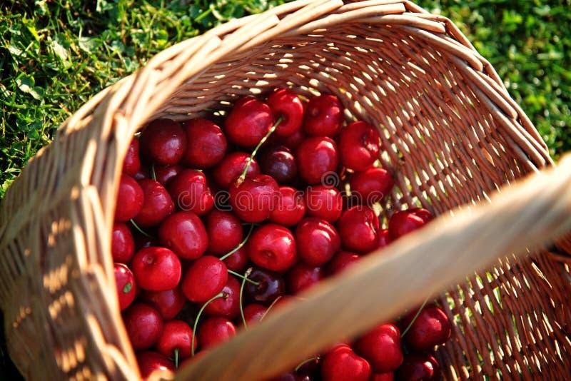 Download Fresh cherries stock image. Image of cherry, dessert - 69512191