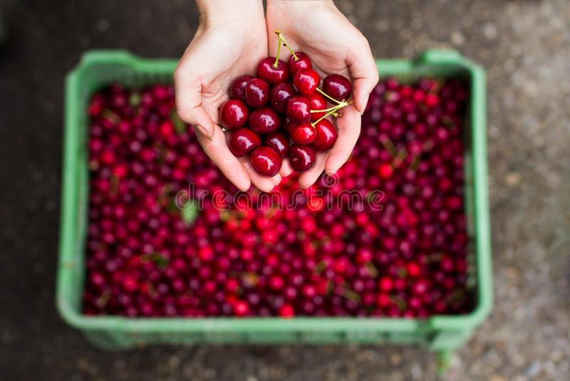 Fresh cherry 1 stock photo