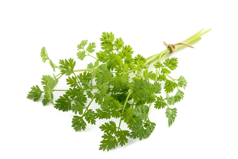 Fresh Chervil bunch royalty free stock photos