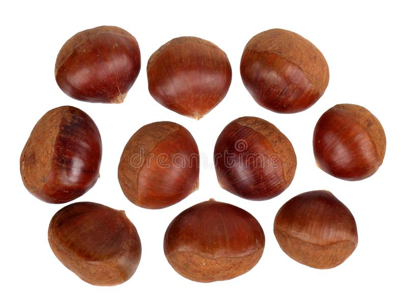 Fresh chestnut seeds royalty free stock photography