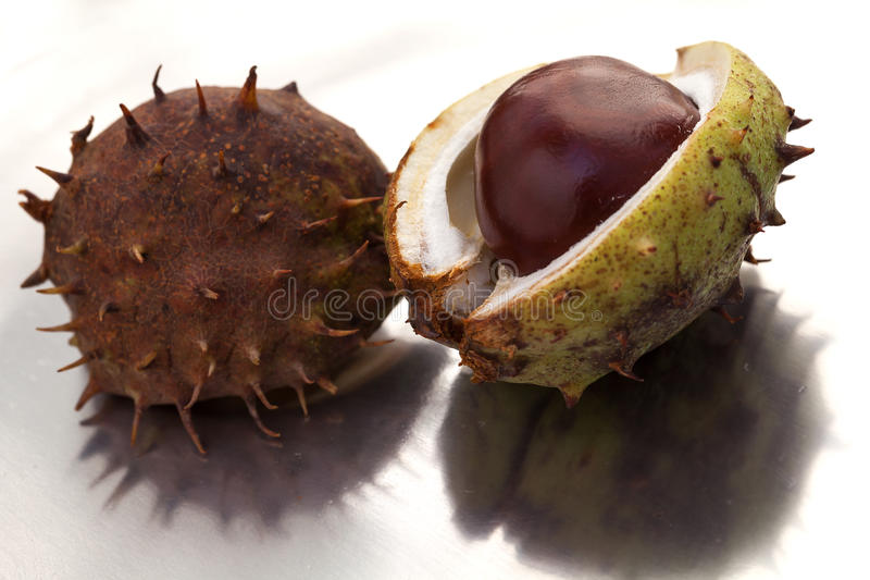 Fresh chestnuts. royalty free stock photos