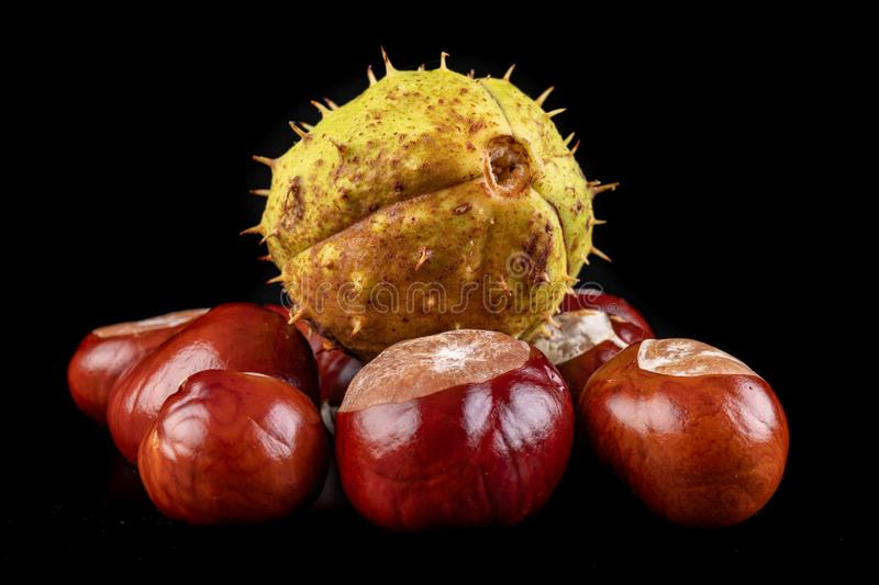 Fresh chestnuts on a dark table. Chestnut fruit from Central Europe stock images