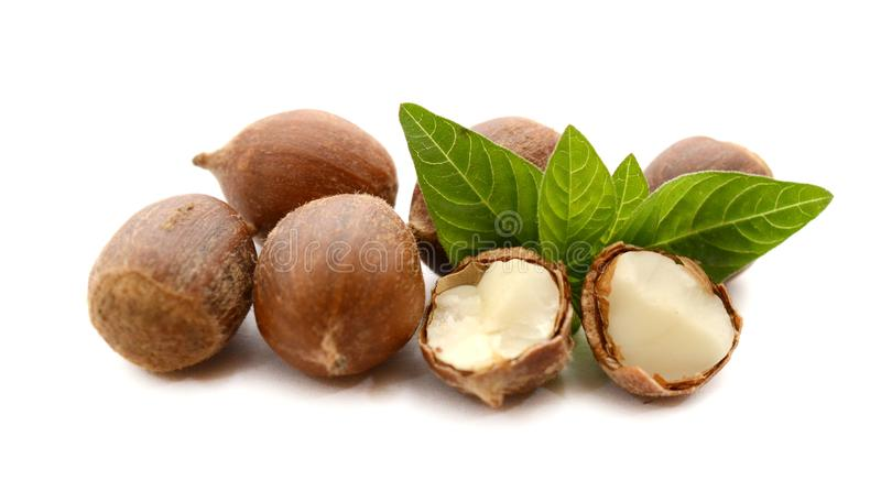 Fresh chestnuts with green leaves, isolated. royalty free stock image