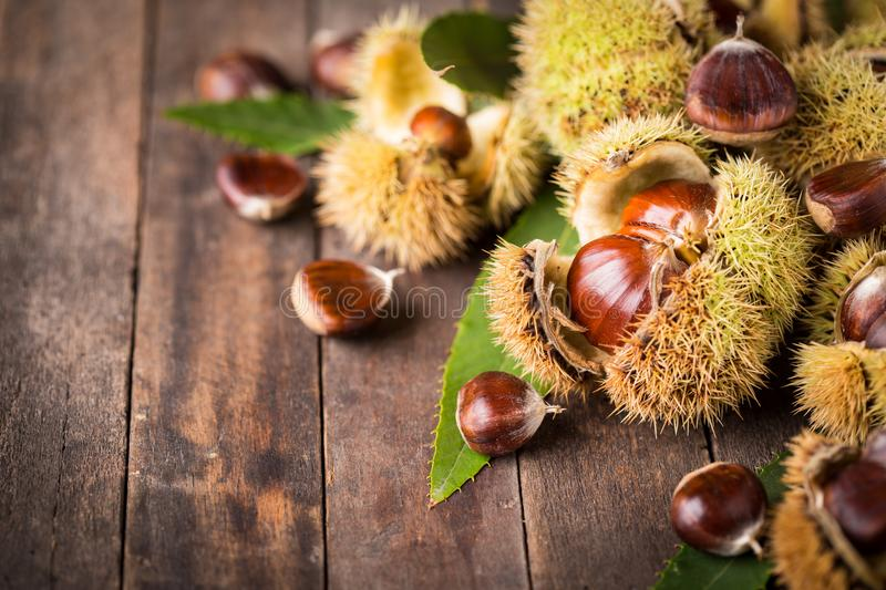 Fresh chestnuts stock photography