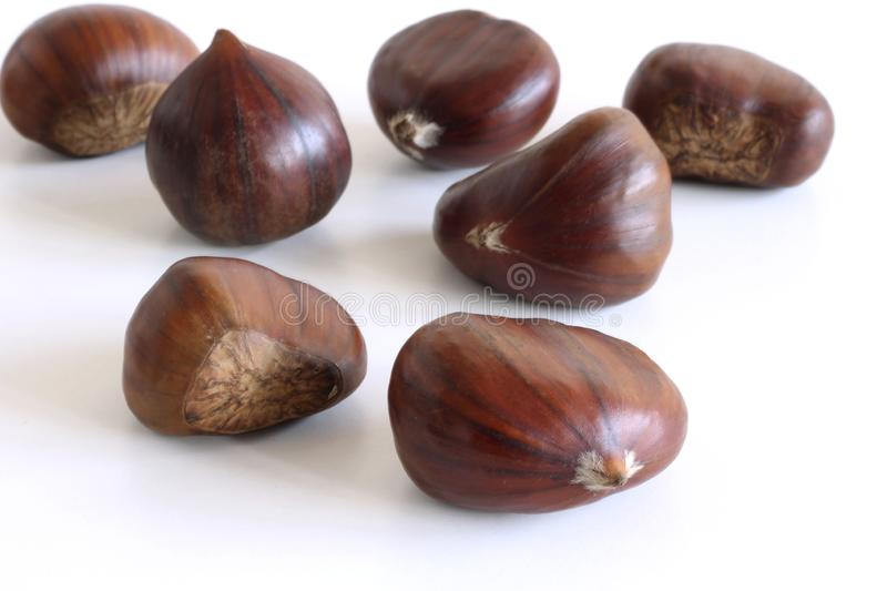 Fresh chestnuts on a white background. Isolated chestnut set. The name also refers to the edible nuts they produce. Concept of hea royalty free stock image