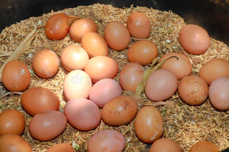 Fresh chicken eggs in organic farm natural. Organic food stock photography